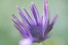 purple-ish