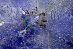 blue impression #14