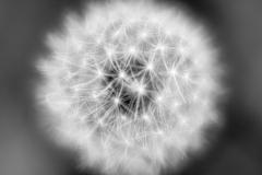 ball of floofy stars