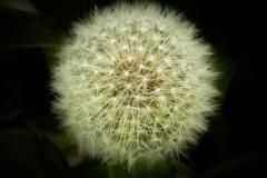 weed sphere 2