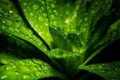 very much green