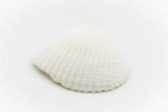 Shells 7
