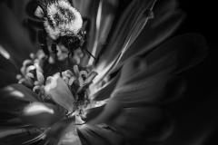 illuminated bee