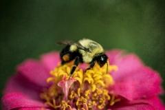 a tall bee